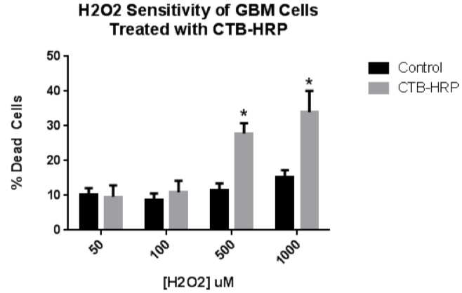 H2O2 sensitivity of CTB-HRP-treated GBM cells
